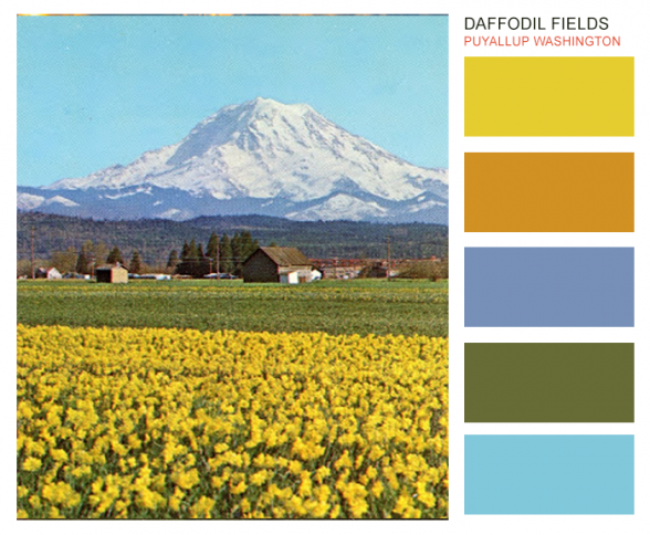 Brand color ideas from the Daffodils in Puyallup and Pierce County