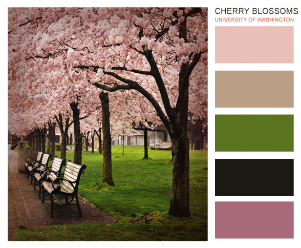 Color ideas for feminine or baby-oriented brands