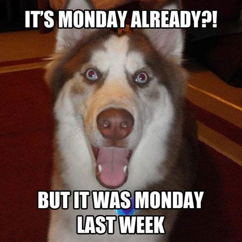 realtor Monday memes
