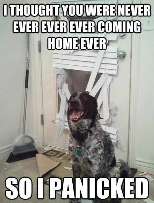 real estate pet meme