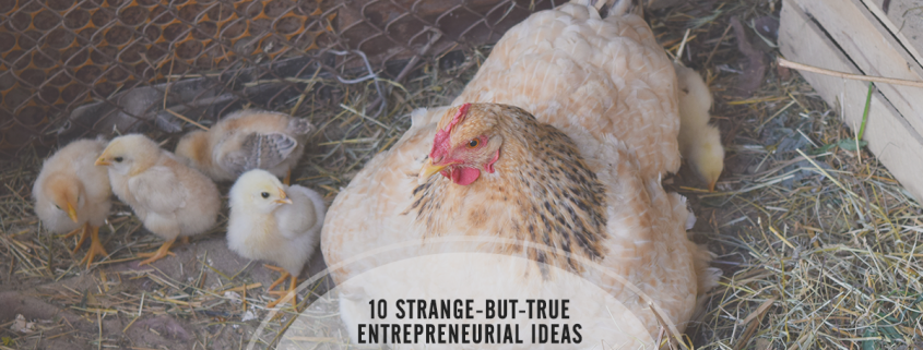 10 strange-but-true entrepreneurial business ideas